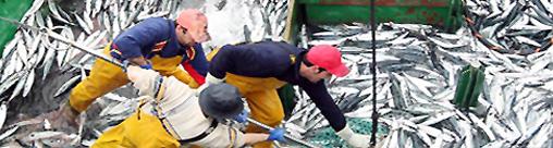 2-pescadores